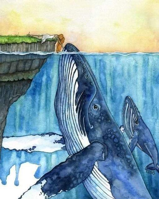 Baiser baleine